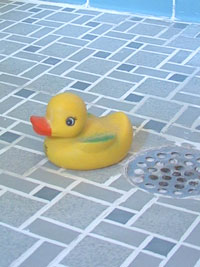 Rubber duck on a grouted tile shower floor